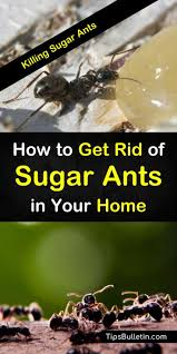 35+ Killing Ants With Boric Acid  PNG