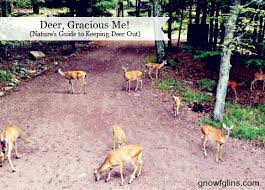 Nature S Guide To Keeping Deer Out Of Your Garden