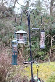 imagem de pássaros alimentando a