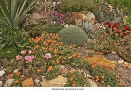 the tucson cactus and succulent society