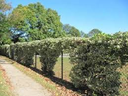 When Trellis Meets Vine Penn Fencing