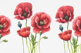 red poppies wallpaper muralswallpaper