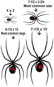 Black Widow Spider Vinyl Graphic Car Decal Sticker 4 Colors 6 Sizes Ebay