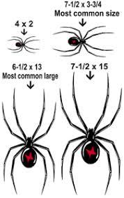Black Widow Spider Vinyl Graphic Car Decal Sticker 4 Colors 6 Sizes Ebay
