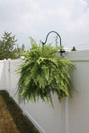 Hanging Plants On The Fence 31 Gardenmagz Com Hanging Plants Outdoor Hanging Plants On Fence Fence Plants