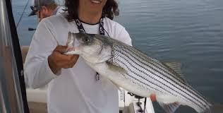 on lake lanier fishing for striper