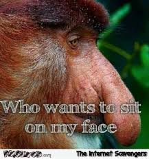 funny proboscis monkey meme pmslweb