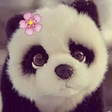 صور باندا إقرأ رمزات باندا كيوت رمزيات باندا حب دب الباندا زعلان