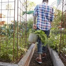 the 5 best veggies to grow in a raised bed