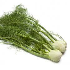 Fenikel buľvový Finale - Foeniculum vulgare - predaj semien