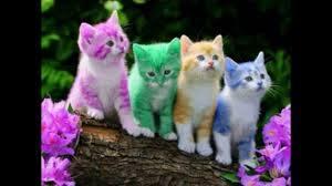 صور 10 قطط جميلين 10 Beautiful Cats Pictures Youtube