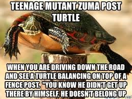 Teenage Mutant Zuma Post Turtle When You Are Driving Down The Road And See A Turtle Balancing On Top Of A Fence Post You Know He Didn T Get Up There By Himself