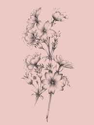 blush pink flower drawing ii mixed