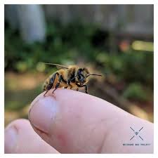 beehives instagram photos and videos vidmid photos