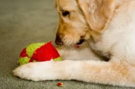 knitting dog toys lovetoknow