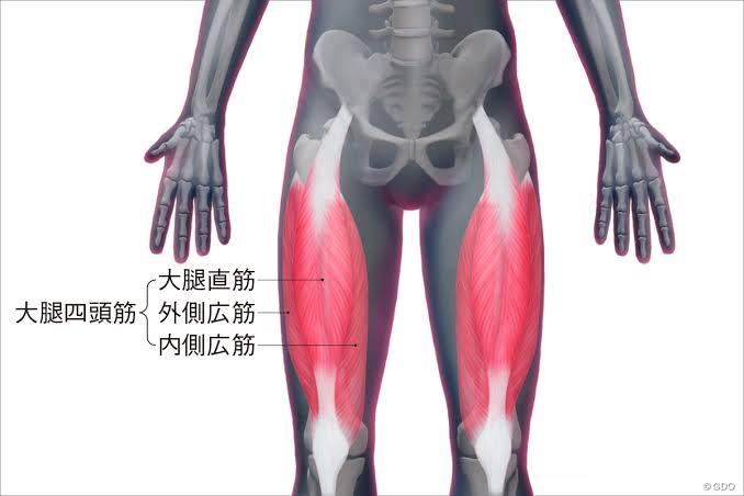 """「大腿四頭筋」の画像検索結果"""""""