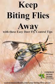 deter tips to keep biting flies away