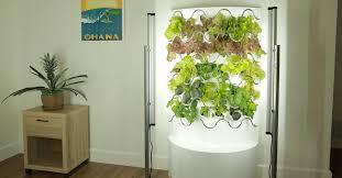 veggies with hydroponic indoor garden