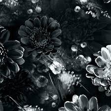 moonlight meadow black fl