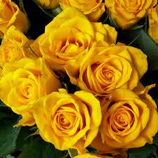 مجموعة باقة ورد صفراء جميلة صور ورد وزهور Rose Flower Images