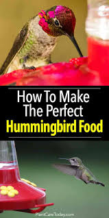 how to make the perfect hummingbird food