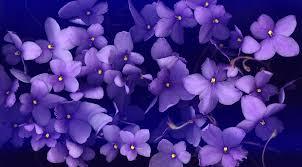 صور زهرة البنفسج احلي خلفيات ورمزيات ورد بنفسج ميكساتك
