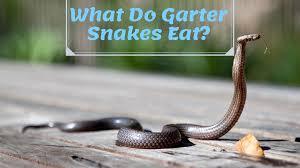 what do garter garden snakes eat