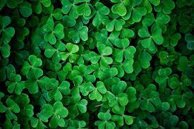 4 leaf clover wallpaper 46 images