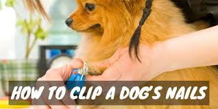 puppy pedicures how to clip a dog s