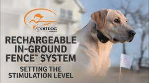 Rechargeable In Ground Fence System Setting The Stimulation Level Youtube