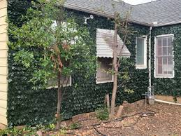 Artificial Ivy Hedge Rolls Colourtree