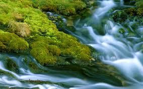 nature hd wallpaper free for desktop