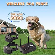 Best Wireless Dog Fence Of August 2020 Comparisons Reviews Bitlylink