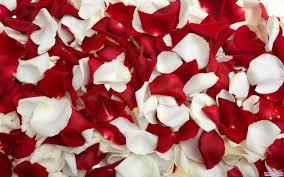 صور خلفيات ورد صور ورد وزهور روعة أجمل صور خلفيات ورد طبيعي