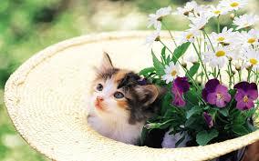 اجمل صور قطط كيوت صور قطط جميلة Hd اجمل صور القطط في العالم 2020