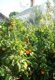 23. Late Autumn – May 2011 Pictures | Deep Green Permaculture