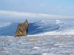 Snow Fence Photos Wyoming Centennial Woods