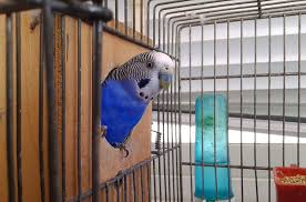 tips to clean the pet bird mess