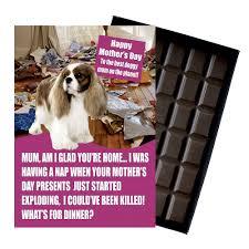 cavalier king charles spaniel dog lover