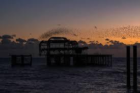 brighton | Starlings above the old pier | Adam Geisler | Flickr