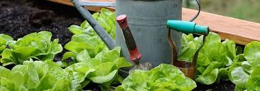 5 best garden fertilizers mar 2020