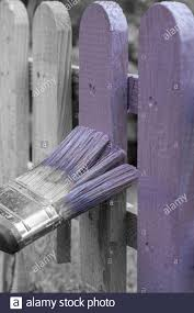 Man Painting A Wooden Picket Fence With Purple Wood Stain And Brush In A Garden With Selective Colour Stock Photo Alamy