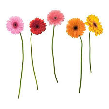 Gerber Daisies Flower Wall Decals Fun Rooms For Kids