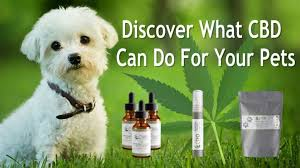 b.Blunt Holiday Review: CTFO's Pet CBD Oil Products - b.Blunt Daily