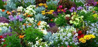 flower garden and how to grow flowers