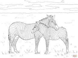 Grant S Gewone Zebra Kleurplaat Gratis Kleurplaten Printen