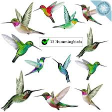 Amazon Com 12 Hummingbird Window Clings Beautiful Anti Collision Window Stickers Non Adhesive And Reusable Vinyl Window Decals For Birds Strikes Arts Crafts Sewing