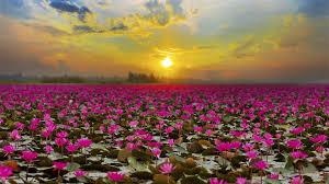 lake lake in udon thani thailand
