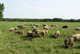 The Fence Vs The Sheep With Images Sheep Fence Electric Fence