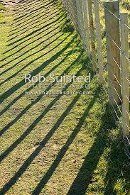 No 8 Fencing Wire And 7 Wire Farm Fence Post And Battens Casting Shadows On Grass Ground New Zealand Nz Stock Photo From New Zealand Nz Photos And Stock Photography By Rob Suisted